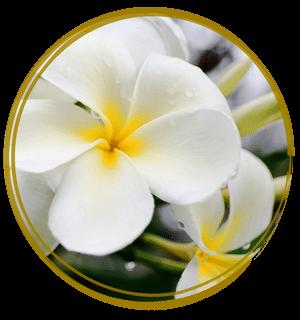 Monoi de Tahite